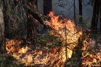 Трассу Пермь — Екатеринбург перекрыли из-за пожара